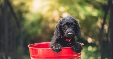 KUĆNI LJUBIMCI Pet znakova koji otkrivaju da bi vaš pas mogao imati dijabetes