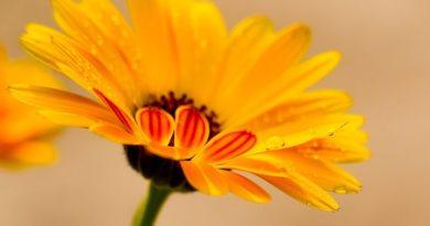 MIRIŠI KAO… Vaši bi se susjedi mogli nemalo iznenaditi ako pomirišu vaše cvijeće