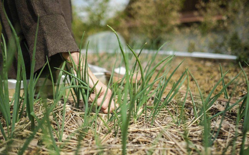 foto Sanjin Kaštelan, vrtlarenje