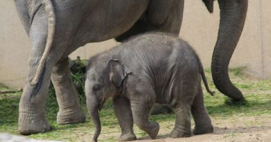 Iskustvo iz prve ruke: Roxy zna što znači imati slona u kući