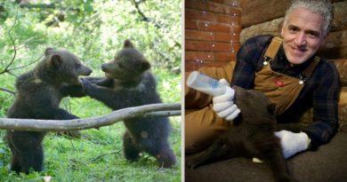 Gordon Buchanan u nevjerojatnom poduhvatu spašavanja grizlijeve mladunčadi